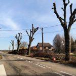 Elagage des arbres rue de St-Avold